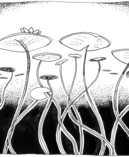 Lillypad illustration